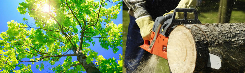 Tree Services Willow Beach